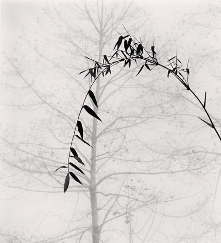 Bamboo tree, Qingkou village, Yunnan, China. (c) Michael Kenna, 2013.
