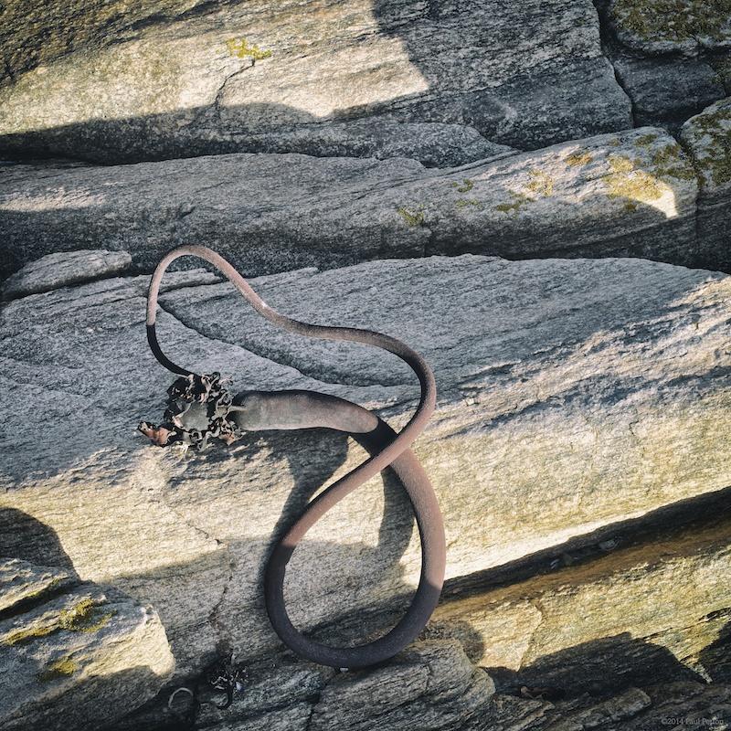 Dried kelp - f16 @ 1/30s